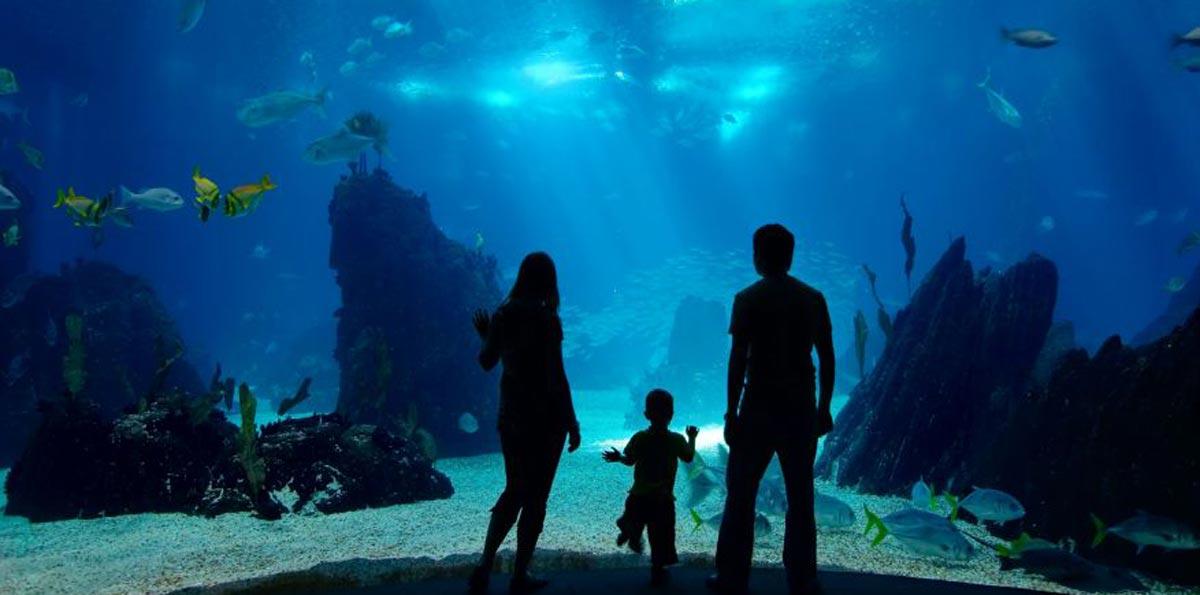National aquarium hotel holiday inn express baltimore Aquarium in baltimore